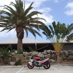I LOVE PALM TREES ALSO THIS IS MY 1ST BIKE