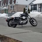 1983 Harley Davidson XLX IRON HEAD