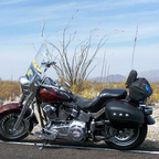 2008 Harley Davidson FLSTF- named her Faith