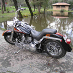 2000 Harley Davidson custom soft tail