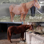 transformation 2 days out of kill pen to 6 months out of kill pen