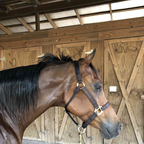 My Arabian gelding.. mainly has been my daughters horse. but looking to make him more my trail horse. ...