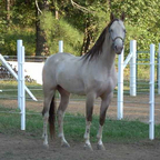 Wyatt... My stallion and Sirocc\'s paternal half brother.