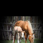 My first reining mare with her fourth foal at a day old